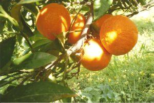 arancia 2